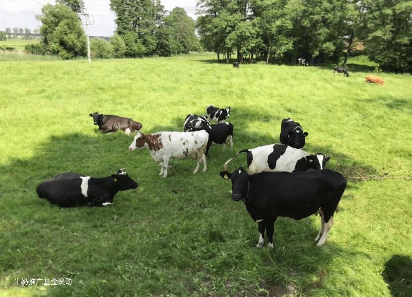 """""""从农场到餐桌""""的策略是什么意思?"""